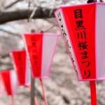 目黒川のお花見クルーズとライトアップ!2015年開催日と時間はこちらから!