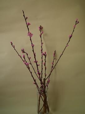 ひな祭りで桃の花の飾り方!簡単に誰でも生ける早ワザとは!