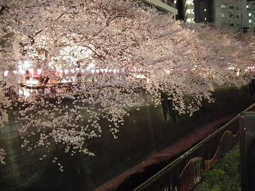 目黒川のライトアップ時間と場所に混雑は!お花見の意外な穴場!