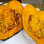 鉄腕ダッシュの黄金かぼちゃ くりりんの高い糖度の秘密と調理法は!