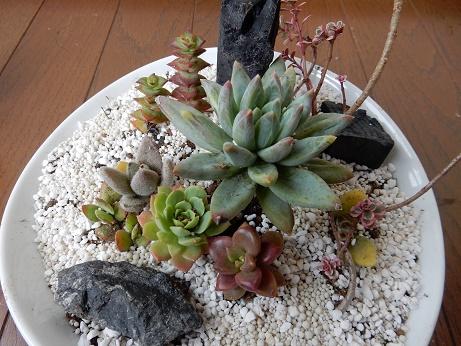 多肉植物の寄せ植えの鉢は?組み合わせでスゴく参考になるサイト!