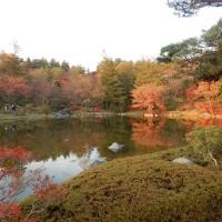 昭和記念公園の紅葉2016 イチョウ並木の黄葉の見頃はいつ!?