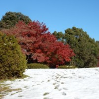 昭和記念公園の銀杏並木の見頃は過ぎた?富士山の絶景ポイント発見!
